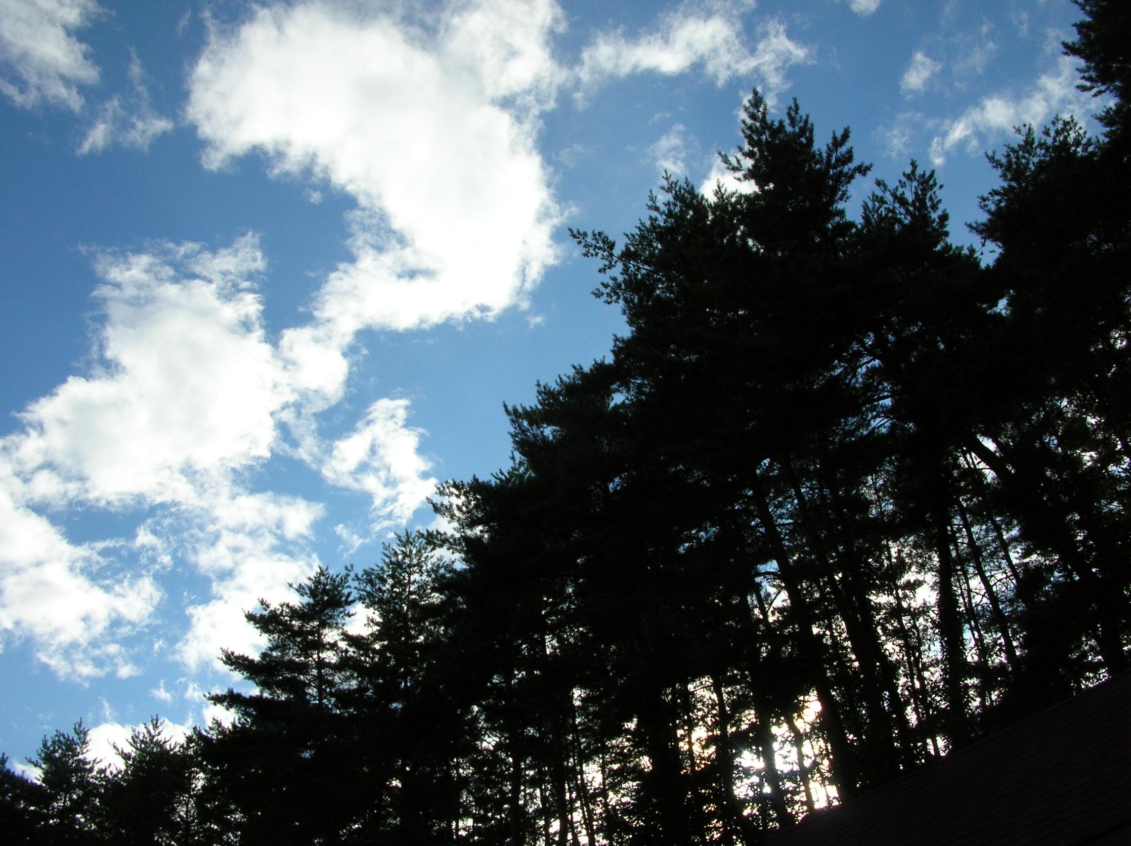 夏の空、雲に風.JPG